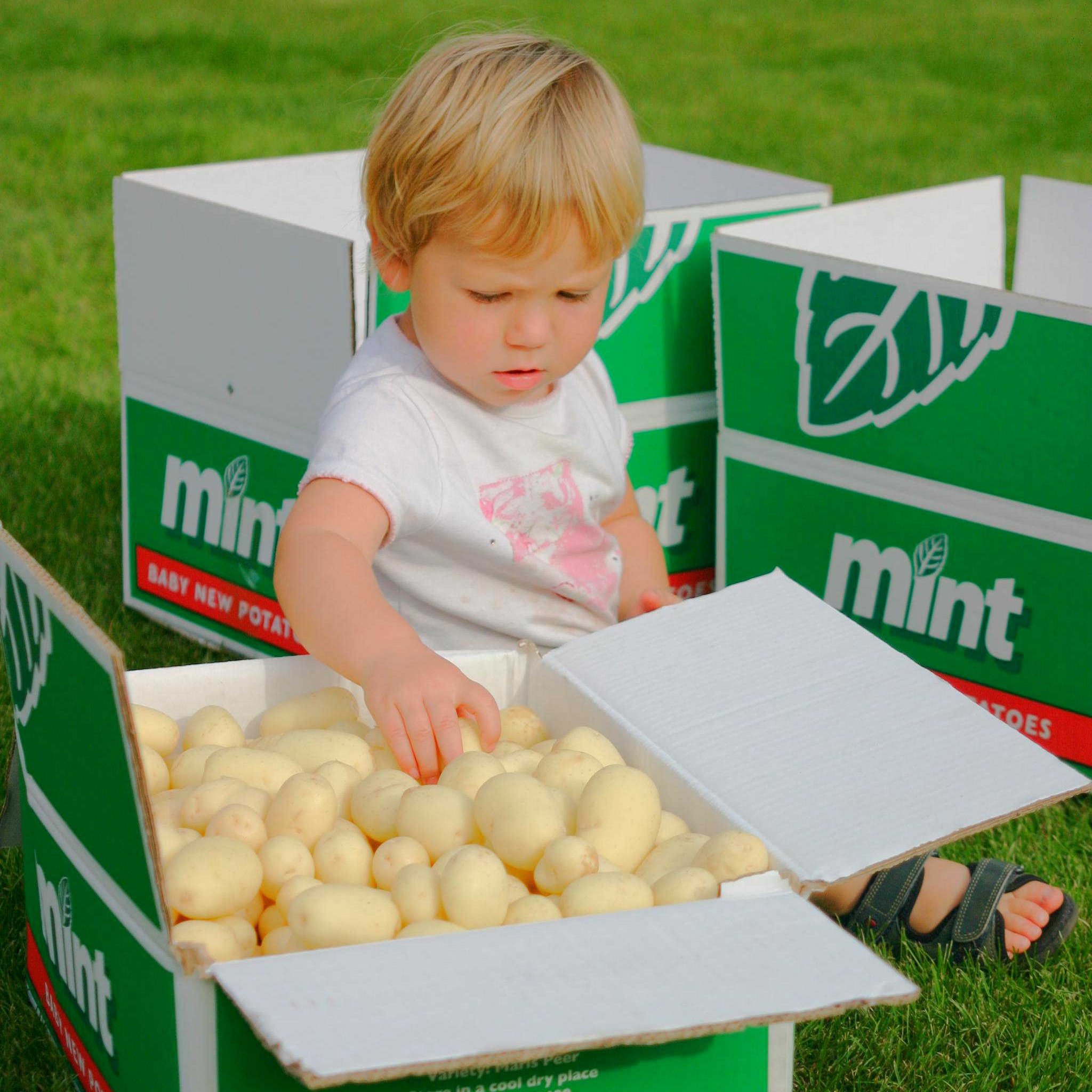 Mint Baby Potatoes